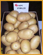 HZPC Vivaldi potatoes